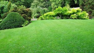 Lawn Care in London